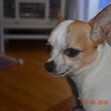 Mari (Chihuahua)