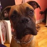 Franklin  (Boxer)