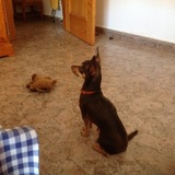 Botón (Chihuahua)