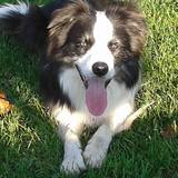 Felino Filou (Border Collie)