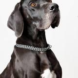 Aika (Dogo Alemán)