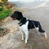 Max (Bretón)