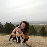 Keops  (Boston Terrier)
