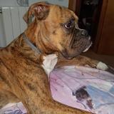 Xenon (Boxer)