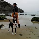 Tayson (Bull Terrier)