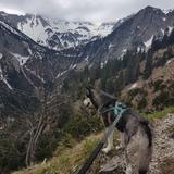 Zazou (Sibirischer Husky)