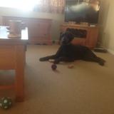 Oscar (Poodle)