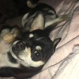 Capitán  (Chihuahua)