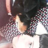 Balou (Terrier De Chasse Allemand)