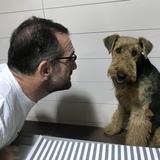 Jara (Airedale Terrier)