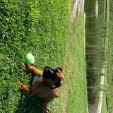 Yairo  (Boxer)