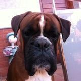 Pipo (Boxer)