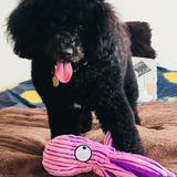 Mika (Perro De Aguas Francés)