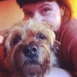 Dennis (Border Terrier)