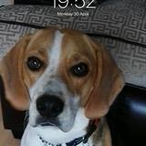 Bruno Burke (Beagle)