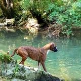 Chloé (Boxer)
