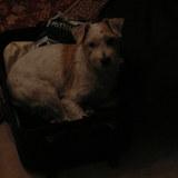Ännie (Jack Russell Terrier)
