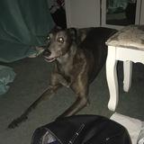 Buster (Greyhound)