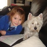 Lilly  (West Highland White Terrier)