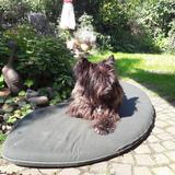 Sina (Cairn Terrier)