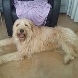 Teddy - Mestizo
