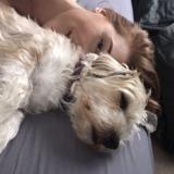Lola (Jack Russell Terrier)