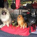 Balto, Kitty, Chispa Y Nana