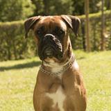 Wilson (Boxer)
