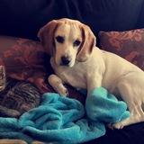 Naia (Beagle)