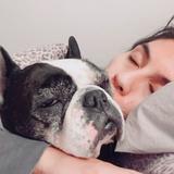 Greta  (Bulldog Francés)