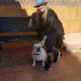 Bella (Bulldog Francés)