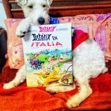 Idefix (Fox Terrier De Pelo Duro)