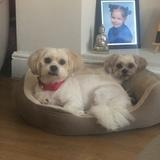 Minnie & Buddy (Mixed)