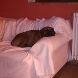Ruby (Boxer)