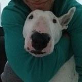 Valentina (Bull Terrier)