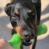 Travis (Dobermann)