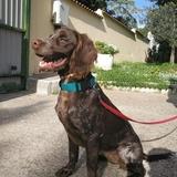 Lola (Bretón)