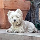Lola (Westy)