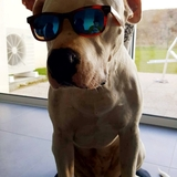 Iron (Dogue Argentin)