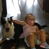 Tekila - Bull Terrier