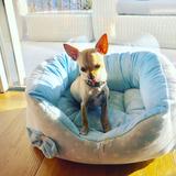 Chico  (Chihuahua)
