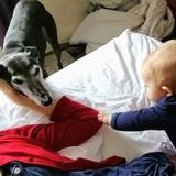 Binky (Greyhound)