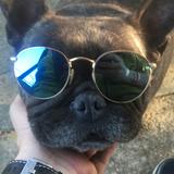 Mina (Bulldog Francés)
