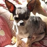 Gutiérrez  (Chihuahua)
