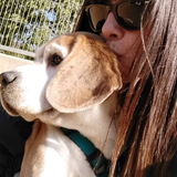 Jeron - Beagle