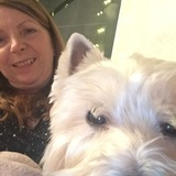 Hugo (West Highland White Terrier)