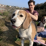 Boris (Beagle)