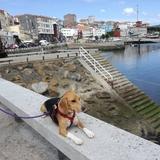 Michone (Beagle)