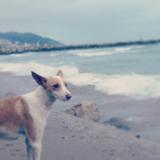 Sisko (Andalusian Hound)