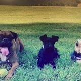 Marta , Negri 2 años y Luna 12 años - Boxer